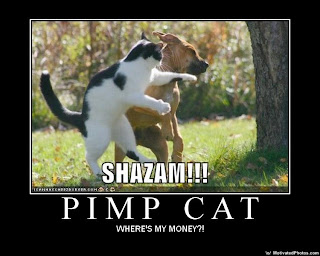 633496020583239138-Pimp-Cat.jpg
