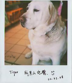 Tiger @阿里山