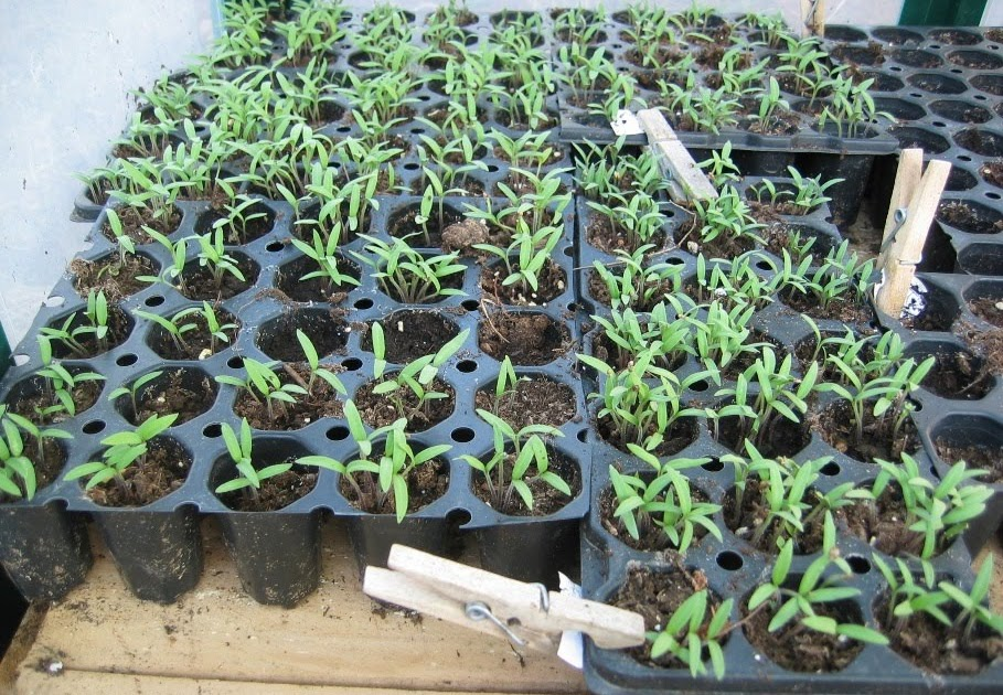 Di logo con la tierra semillero y siembra de verano - Tierra para semilleros ...