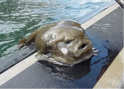 Thats it the internet is over everyone go home creepy for What fish has eyelids