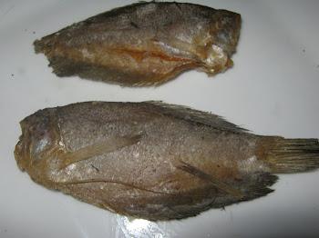 Ikan Sepat Benua