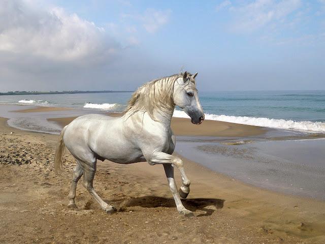 White Horse on beach