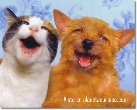 imagenes comicas de perros y gatos
