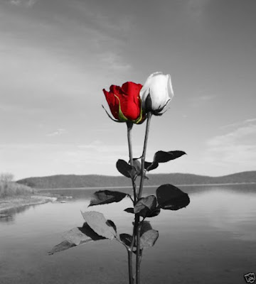 See this fantastic creativity of Art for Red Rose and White Rose Wallpaper.