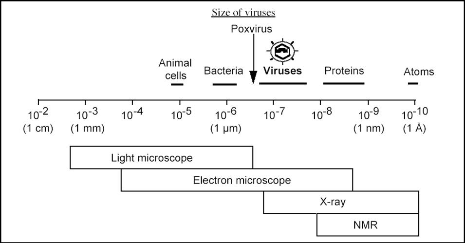 Size Of Virus Bindrdnwaterefficiency
