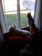 Boys waiting at window