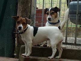 Jacky e Toby