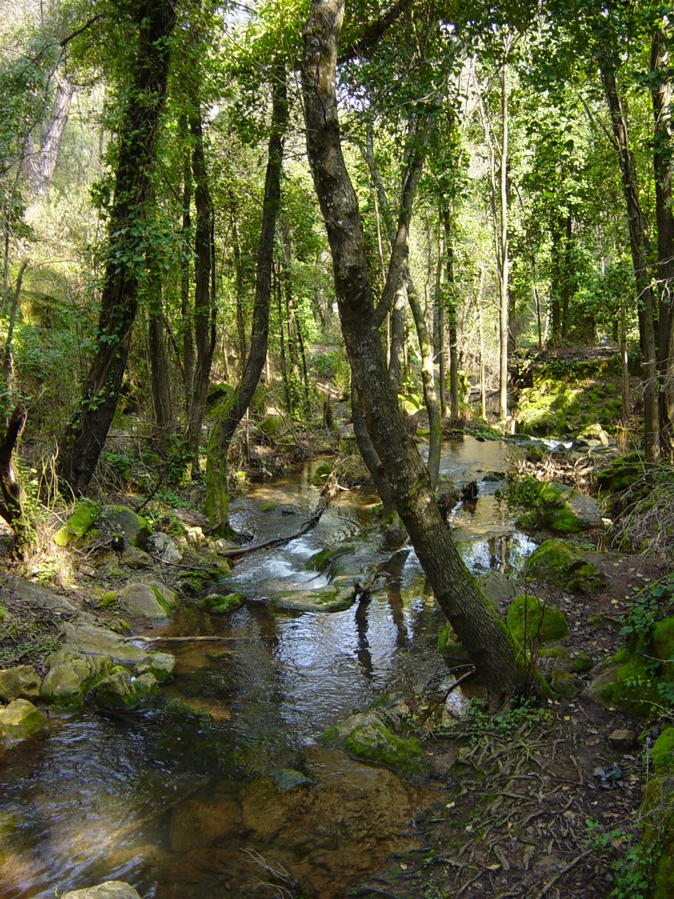 Baño Familiar Publico: Montaña Piedra Luenga: RUTA FAMILIAR ARROYO BEJARANO- BAÑOS DE POPEA