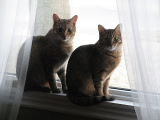 Penny and Fergie watch over the world from their window