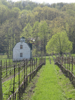 Vineyard near Fielding Estates Winery outside Beamsville