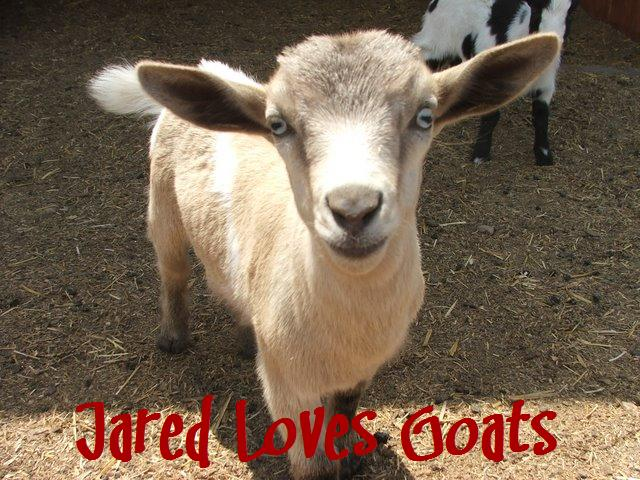 Jared Loves Goats