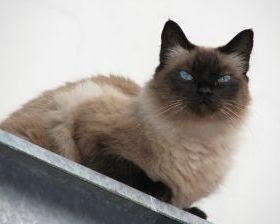 cómo mantener a tu gato fuera de la encimera