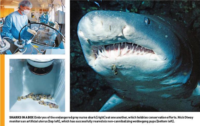 [sharks.jpg]