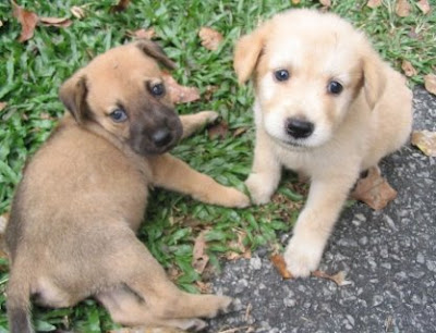 two young cute puppy dogs