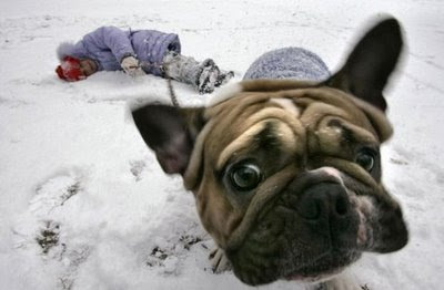 funny-dog-photos-icy.jpg