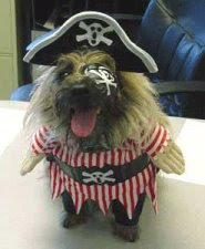 funny animals pirate dog photo