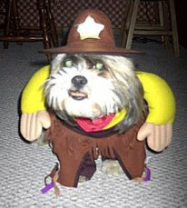 funny dress ups dog as a sheriff photo