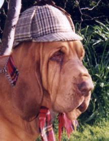 hound dog dressed as sherlock holmes photo