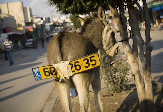 funny ass donkey licence number plate