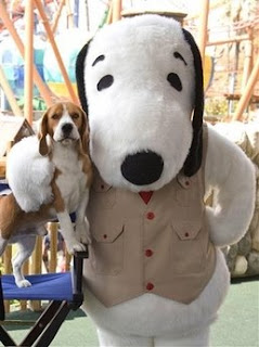 funny animal photos hound dog meets snoopy and poses for a pic