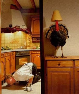 funny fridays animal pics turkey  hiding from being cooked and eaten puts lampshade on head as disguise