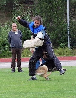 really funny german shepherd police dog training going for crotch instead of arm photo