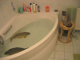 funny animal photos cat watching big fish in bathtub