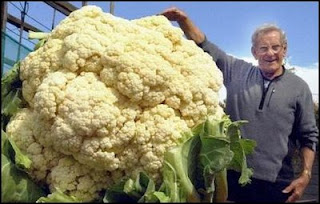 funny vegetable photos massive cauliflower and grower