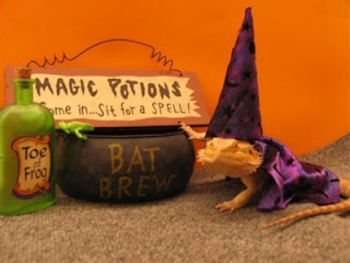 funny iguana picture dressed up as a wizard with a bat brew
