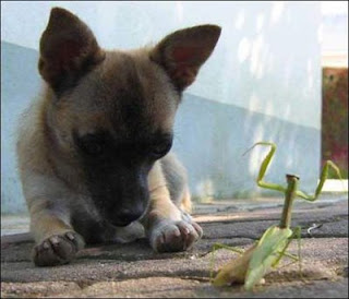 cute sweet puppy dog and grasshopper photo