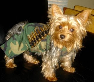 funny dog photos costume of gi joe or army soldier