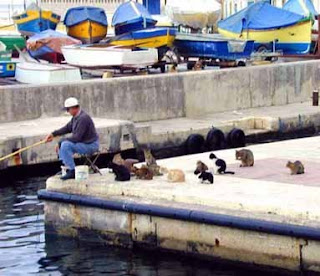 funny cat photos eleven cats sitting on jetty with fisherman waiting for baot or little fish to eat