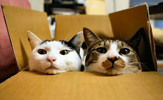 funny cats heads in a box posing for photo