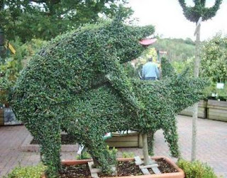 funny but rude photo of bush mad ein shape of two pigs having sex