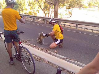 cute koala photo takes a drink from bike rider water bottle