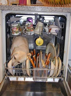 really cute lab in a dishwasher cleaning the bowls