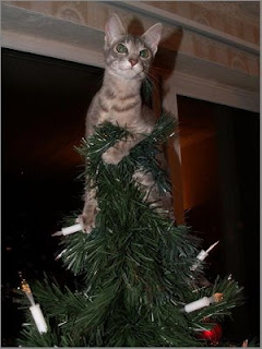 funny photo of christmas tree angel kitten