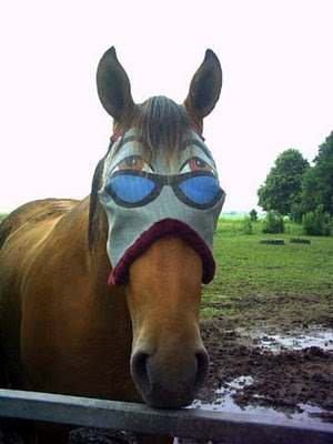 blinders blinkers horse mask thats a cruel thing to do to a horse they