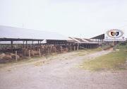Beef Farm Pantura