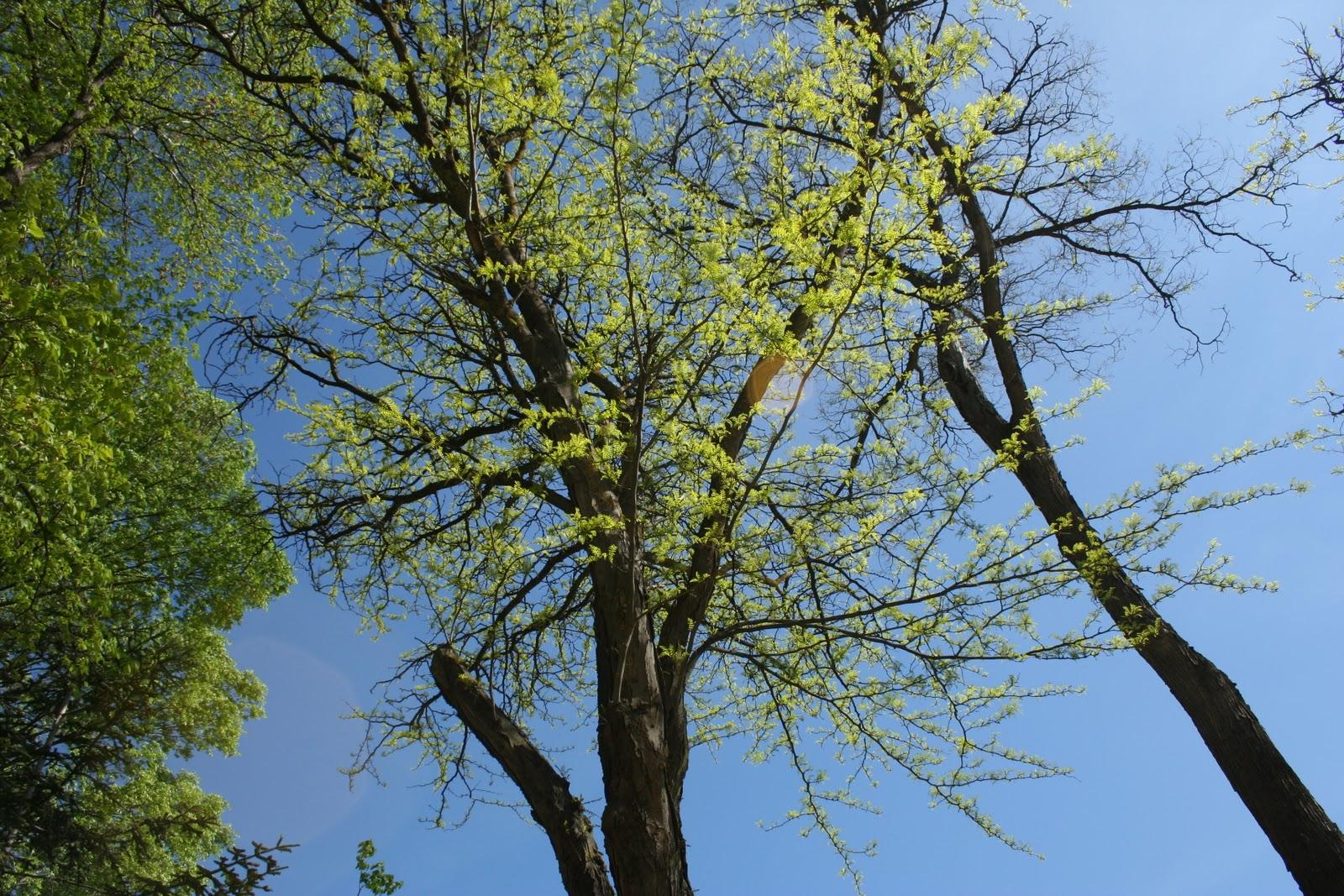 Rutamania arboles y arbustos de la fiesta del arbol - Arboles y arbustos ...