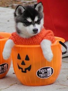 Imagenes de Halloween Imagenes Chistosas - imagenes de hallowen chistosas