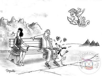 Humor grafico con animales+yapa