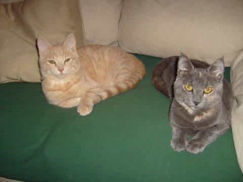 [Hammy,+Stella,+couch]