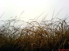 Vinden