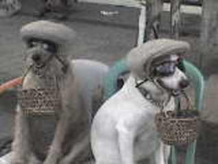 dogs panhandling, begging dog