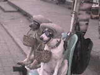 dog breeds sponging, street dogs, dogs exploitation