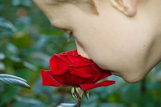 a boy smelling a red rose
