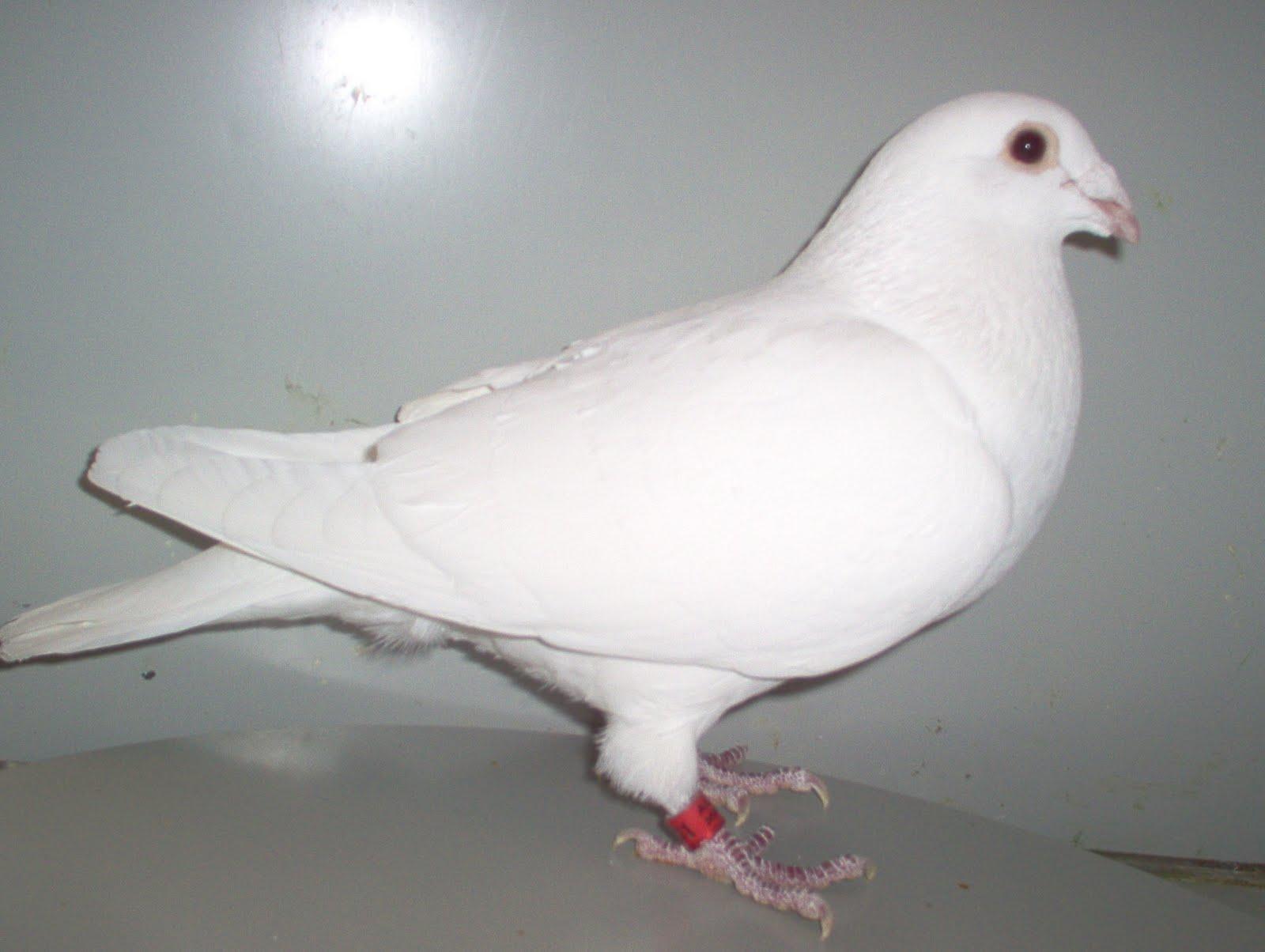 white pigeon jewish girl personals Kalamazoo baby & kid stuff - craigslist cl  (white pigeon) pic  favorite this post may 29 little girl's 12 inch bike $12.