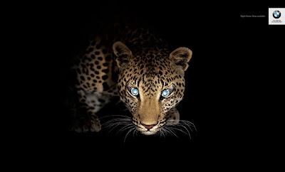 BMW night vision leopard