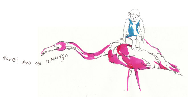 Norris and the Flamingo